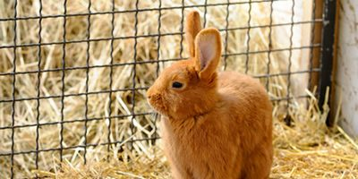 Feeding Your Pet Rabbit Correctly