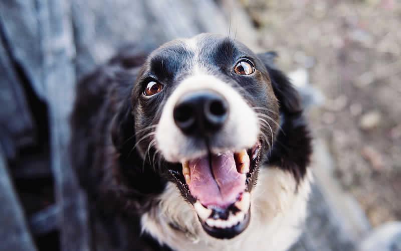 Why do we love those 'puppy dog eyes'?