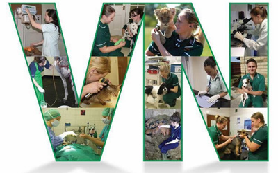 May is Veterinary Nurse Awareness Month