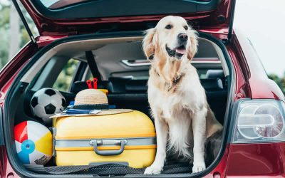 Pet travel after Brexit