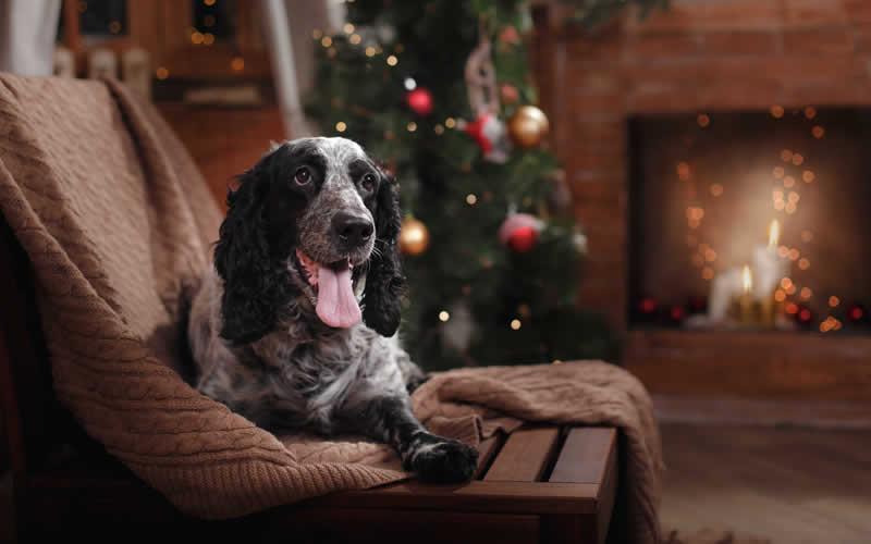 christmas sleeping dog